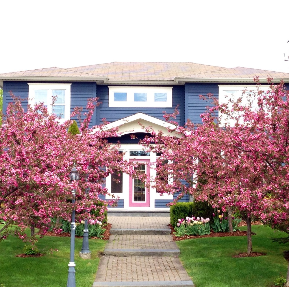 Pink Flowering Crab to match the front door. The client loves pink!.jpg