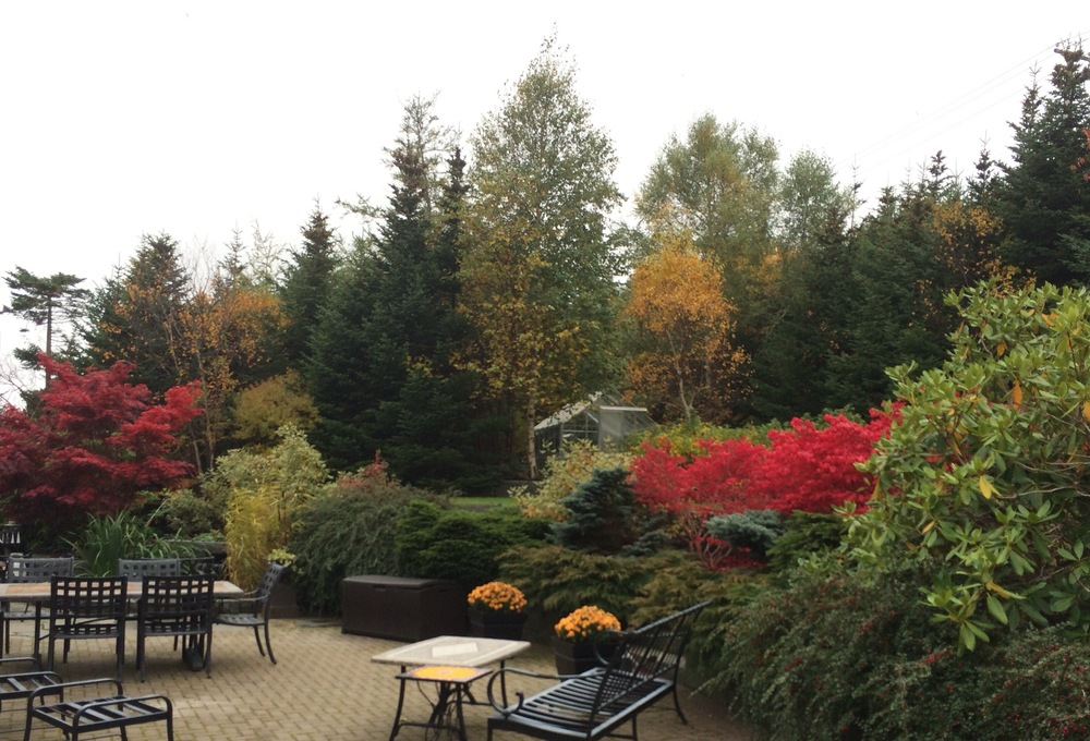 Rear Garden in Fall.jpg