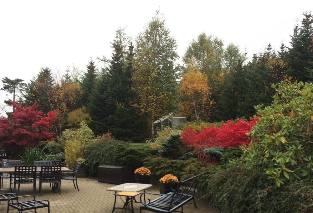Rear Garden in Fall.jpg