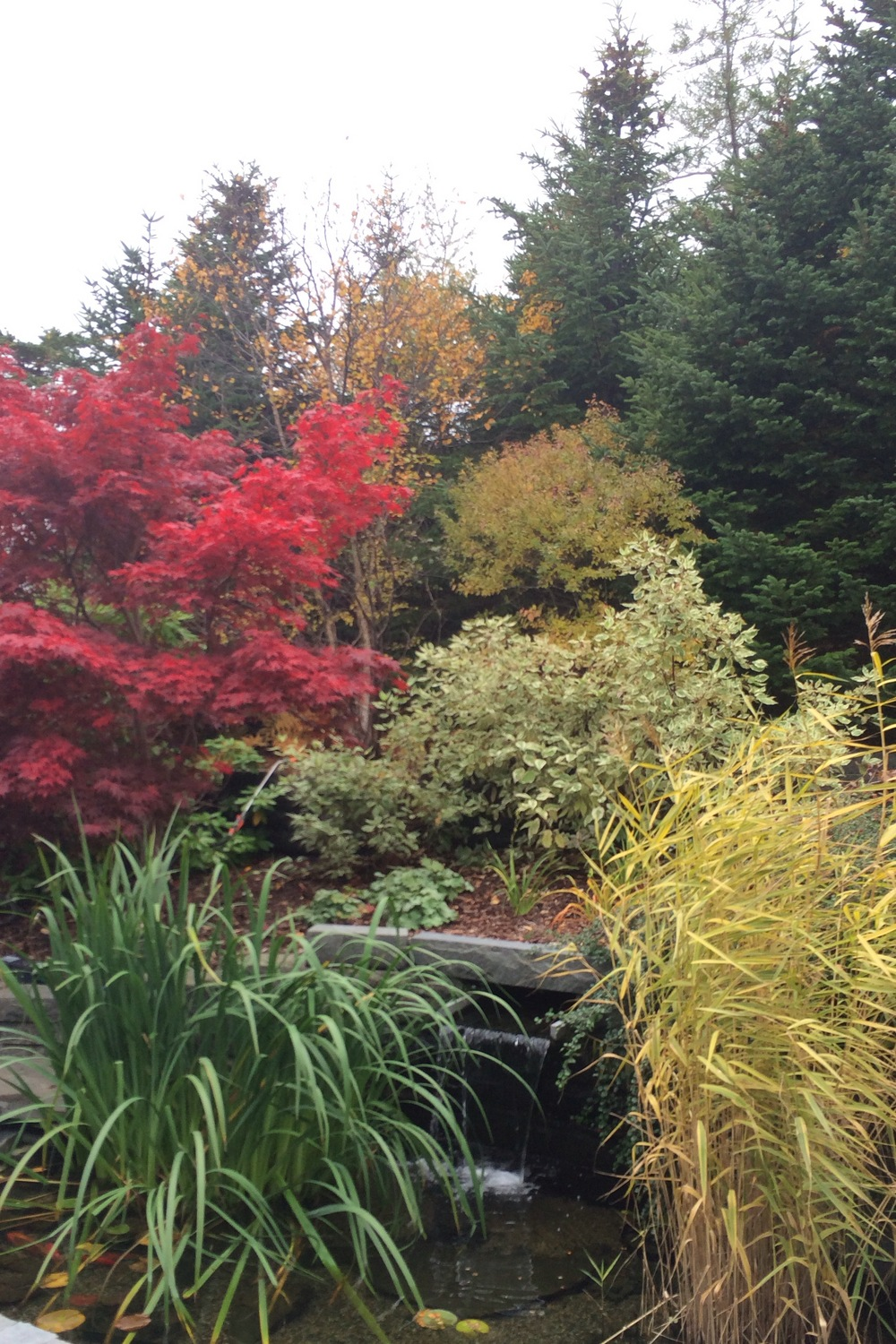 The Pond in the fall.jpg