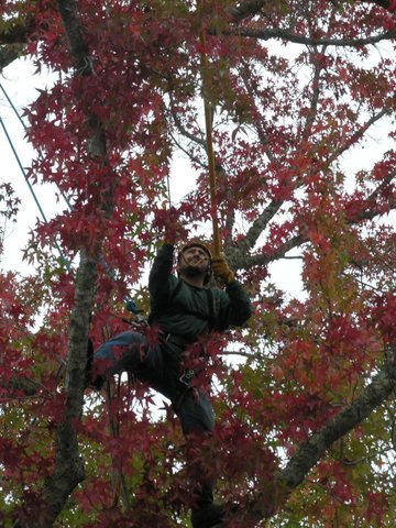 certified-arborist-in-marin-county.jpg
