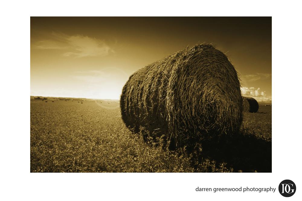 landscapes011.jpg