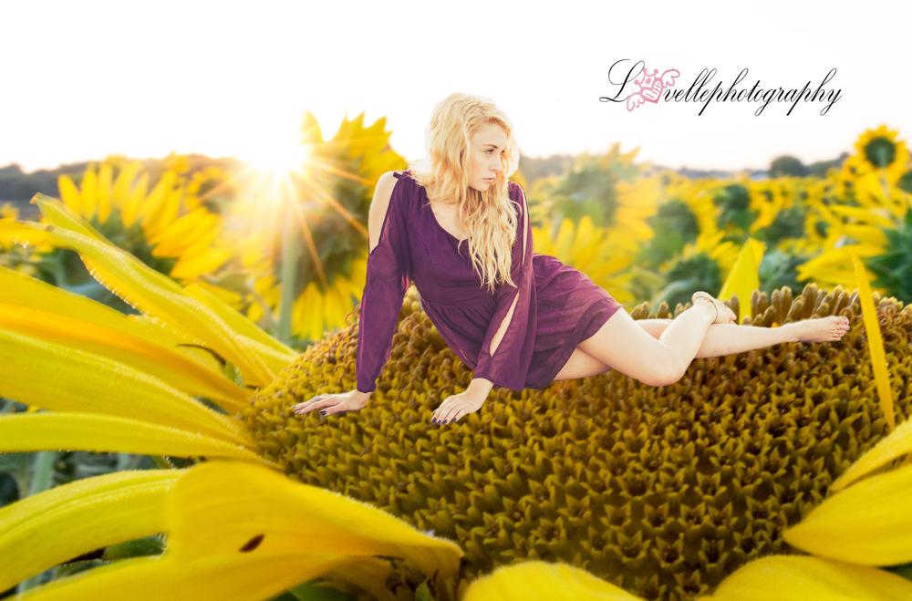 sitting on a sunflower....logo.jpg