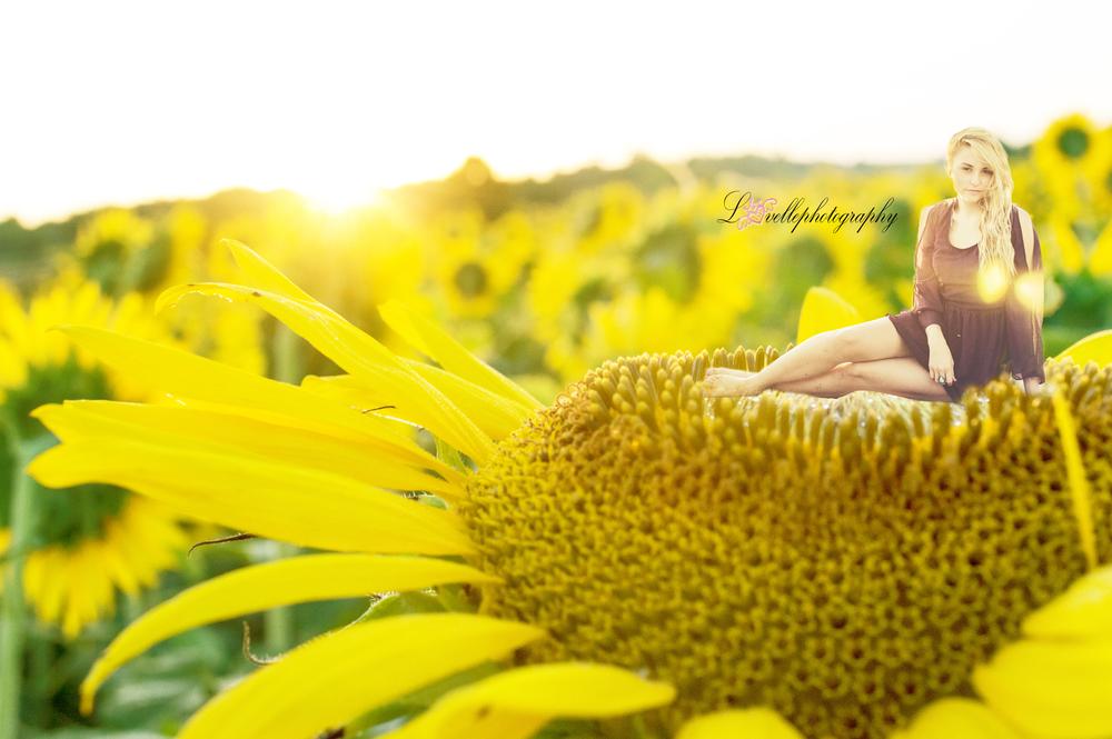 on a sunflower...logo.jpg