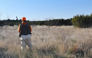 - A quail hunter walks through tall, dead grass near Bronte. Grasslands that have not been grazed or managed pose a serious wildfire threat in parts of the state. Texans should take precautions to avoid sparking fires. (Texas A&M AgriLife Extension Service photo by Adam Russell)