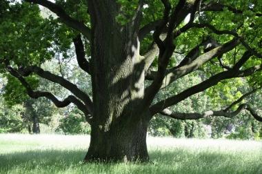 Baum_28.jpg