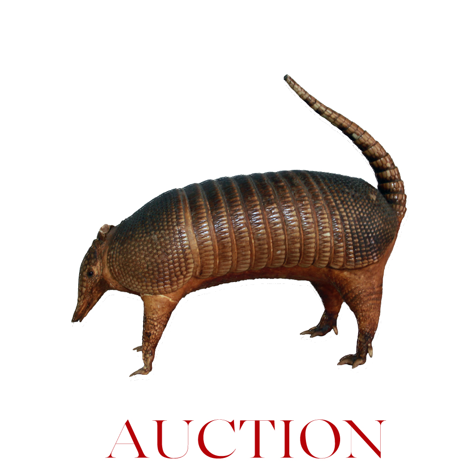 22 Armadillo singleRED down .jpg