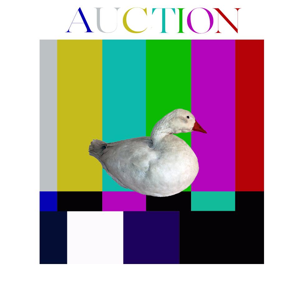 22 duck multi up .jpg