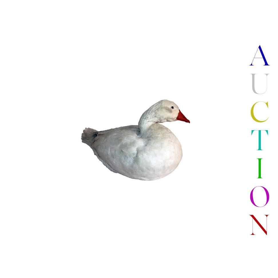 222 Final Single duck .jpg