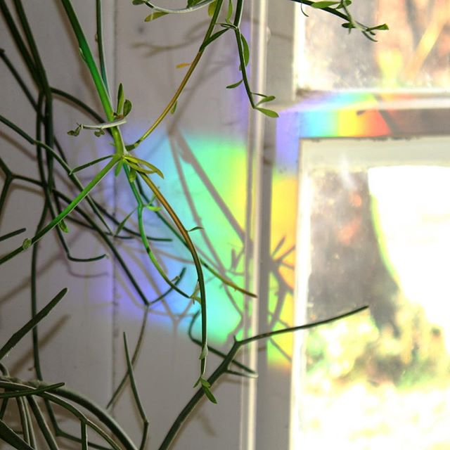 Fall brings the prism rainbow @that_old_farmhouse