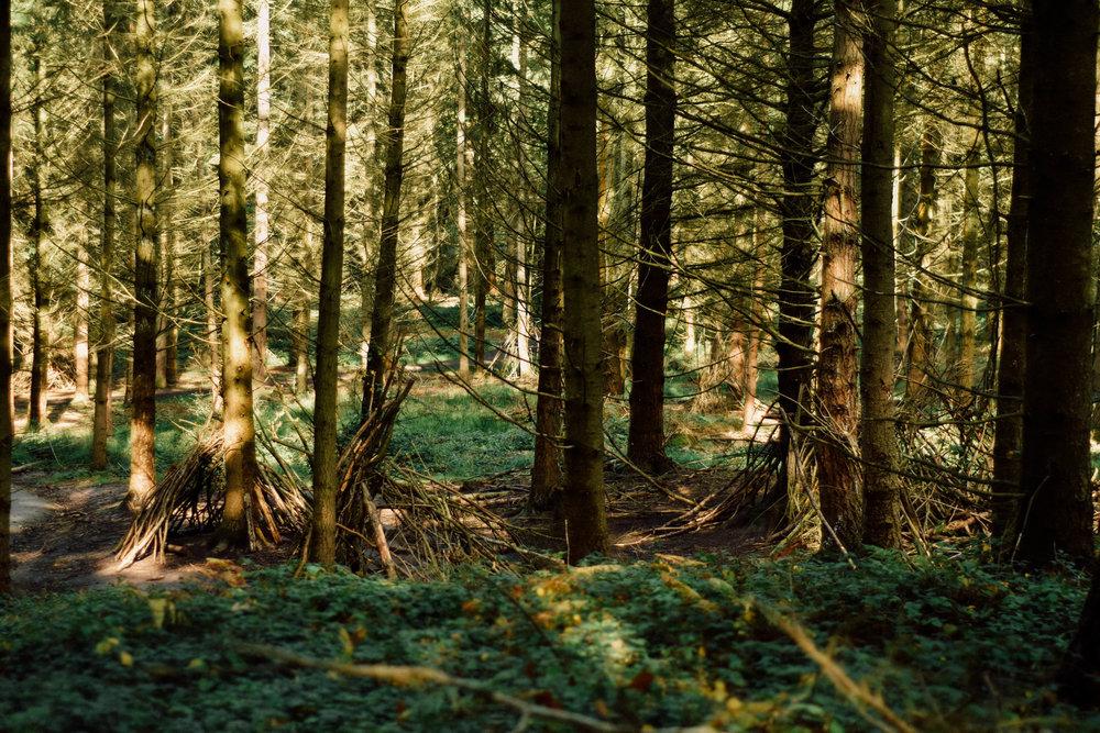 Edited - Woods-2.jpg