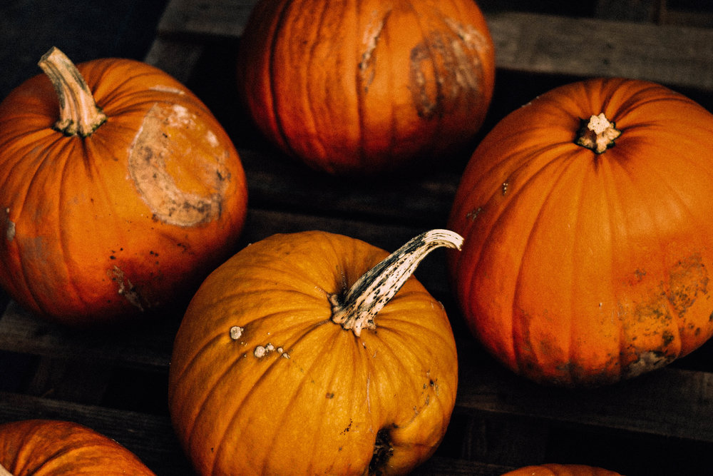 ShannahLauren(Halloween)-16.jpg