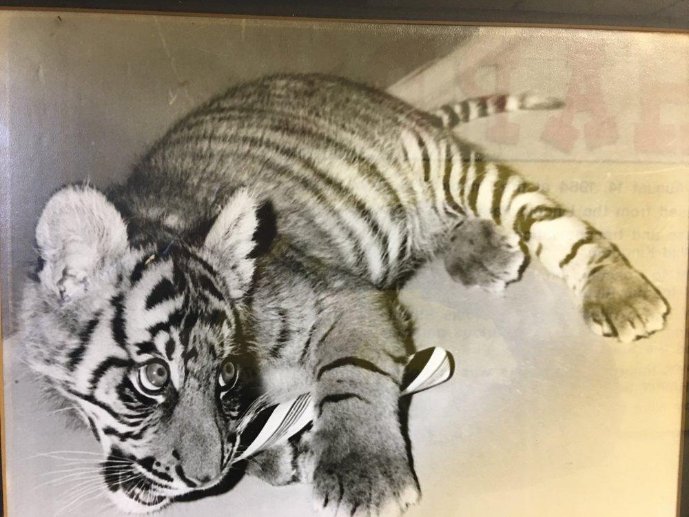 Frank Raised Happy the Tiger Cub.
