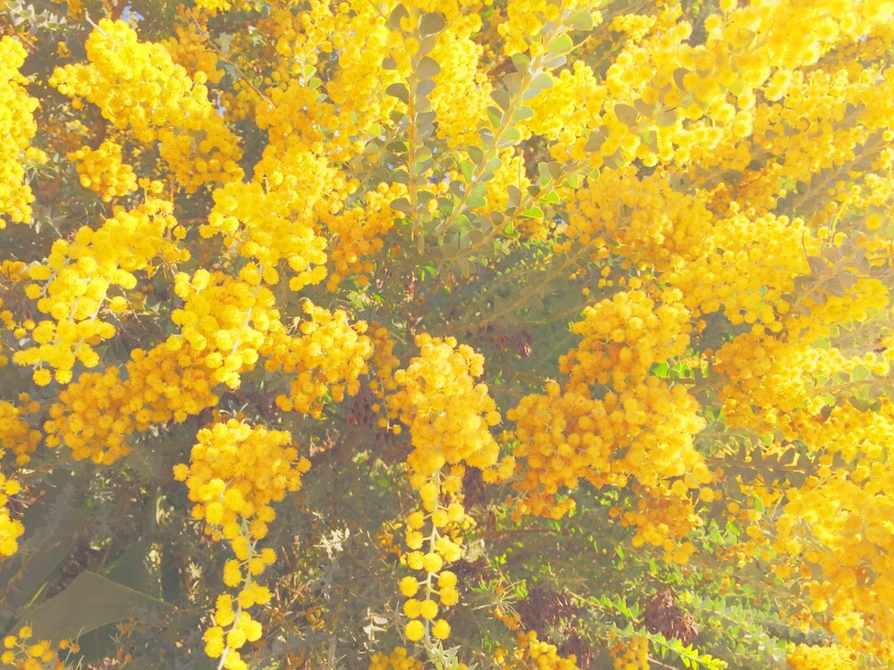 yellow spring_iphonevsco2.jpg