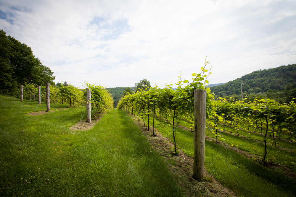 Vermont Vineyards - who knew?
