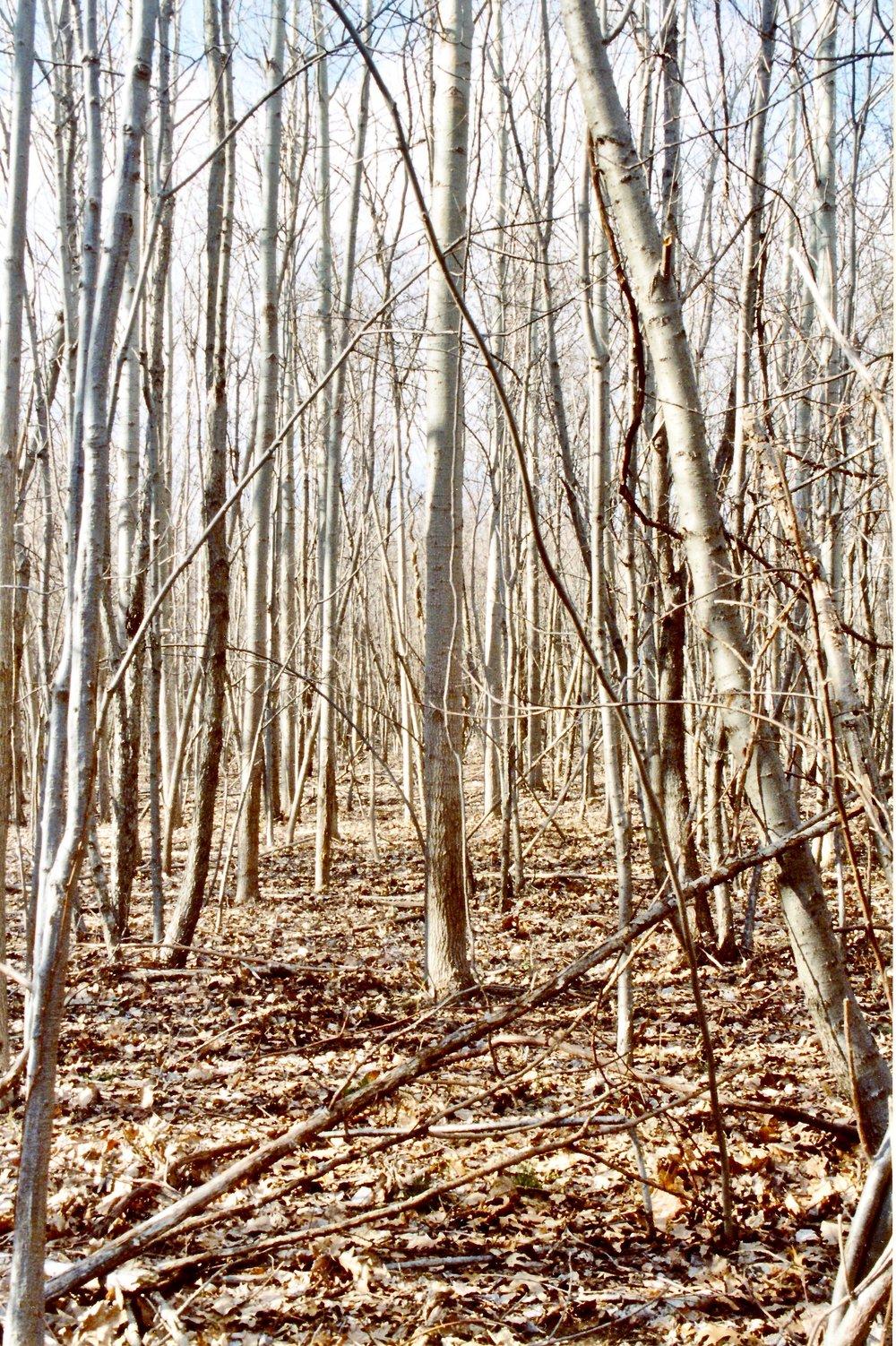 Rye, NY  2006