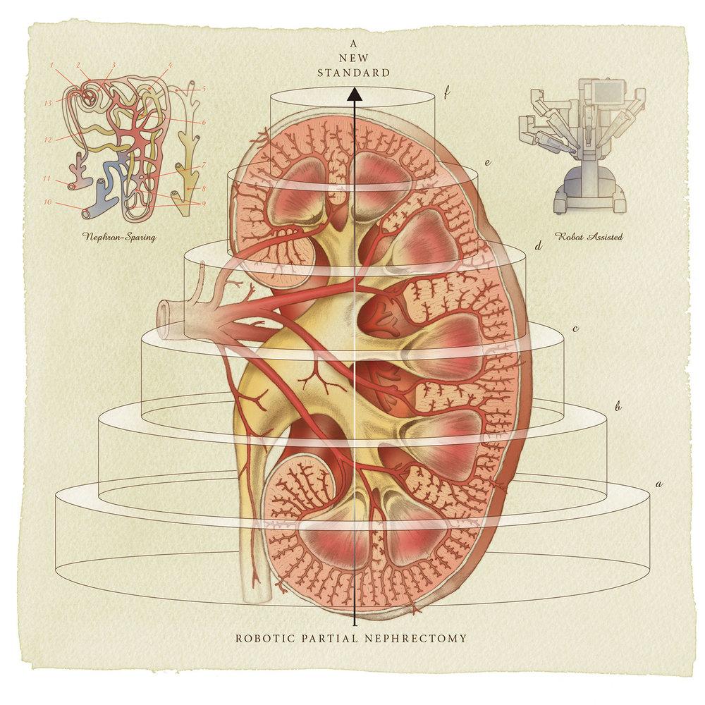 Urology-Cover-Final-02.jpg