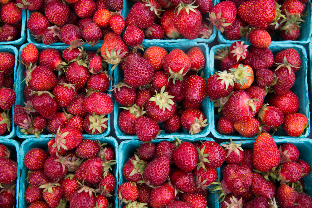 strawberry food web-1.jpg