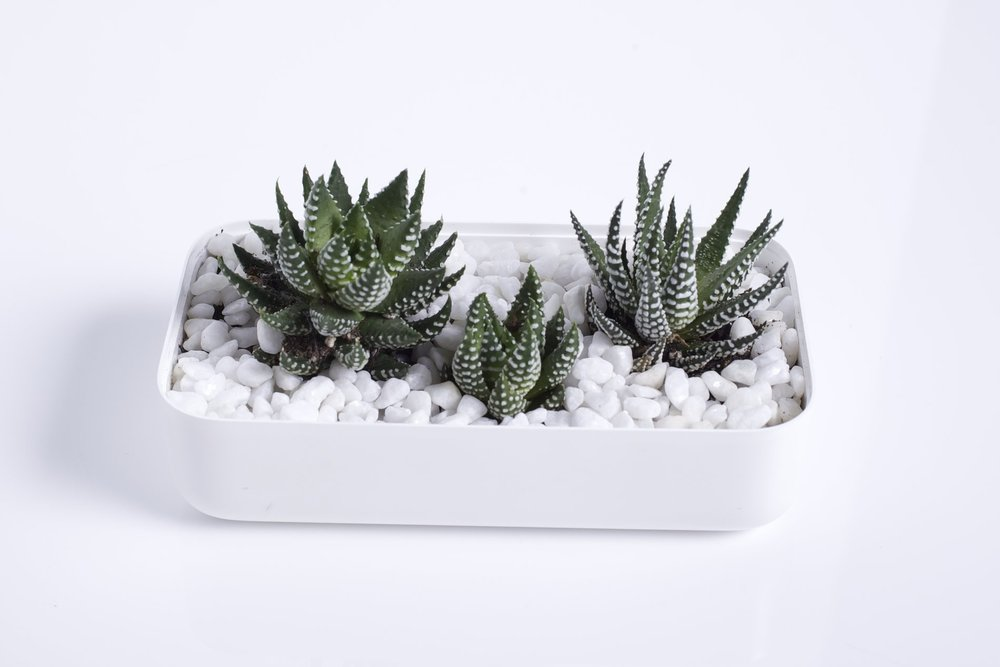whiteboxlab_planter-3.jpg
