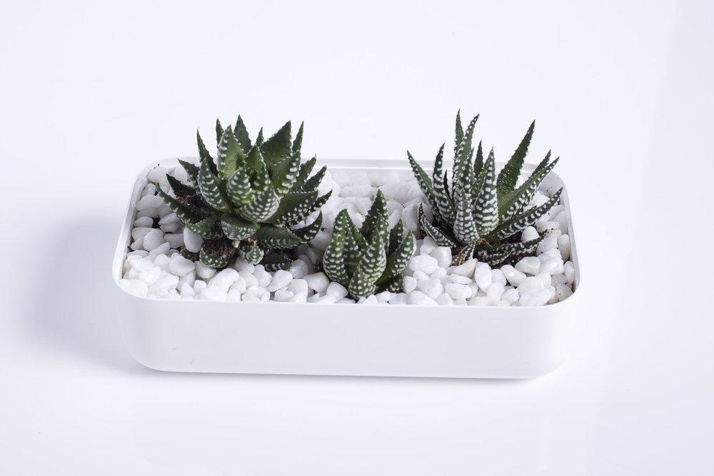 whiteboxlab_planter-3.jpg