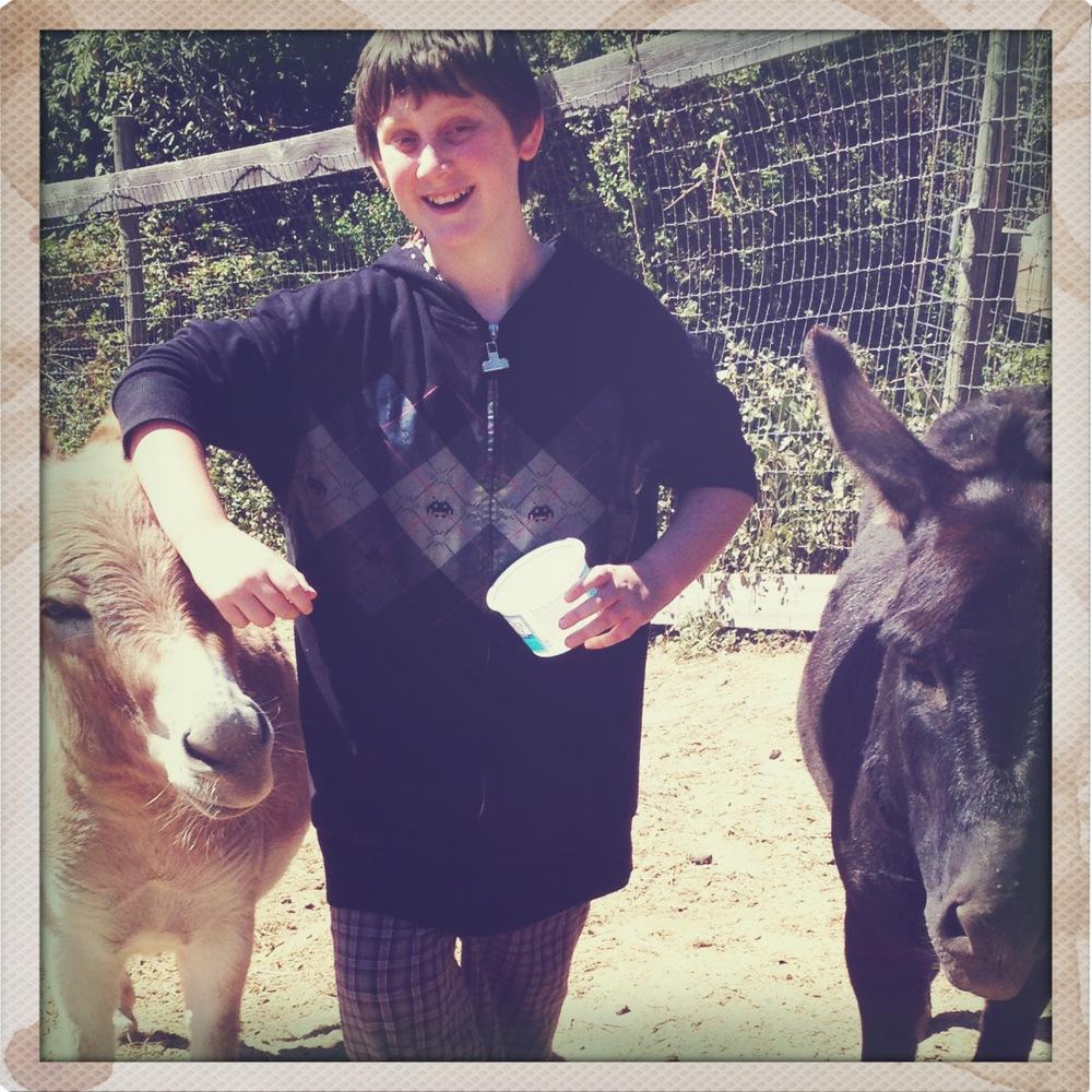 donkeys 1.JPG