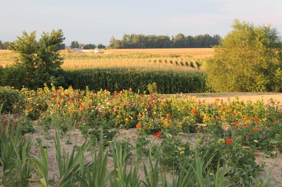 farm2.jpg
