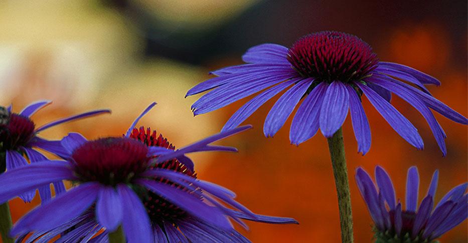 C0NE FLOWER.jpg