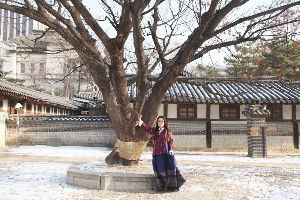 hanbok-tree-1024x682.jpg