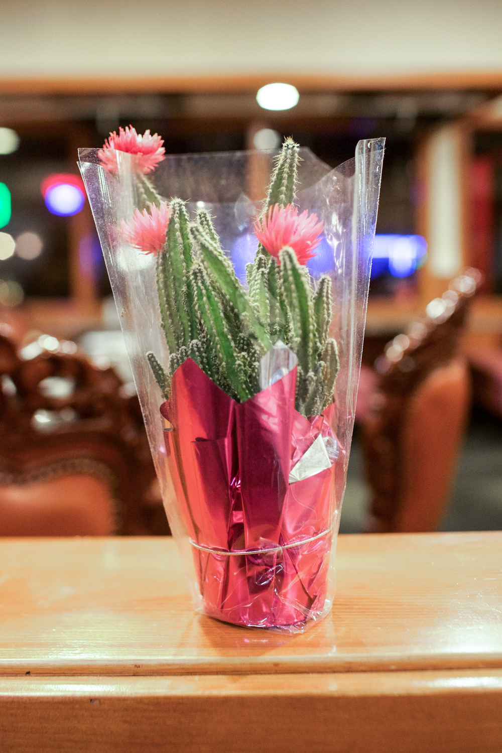 These cactus are scattered through the restaurant. Random and cute.