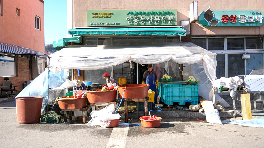 Shop that we encountered while walking around town. The locals were cleaning salted napa cabbage, which they ship out to business that make kimchi and dumpling out of the leaves.