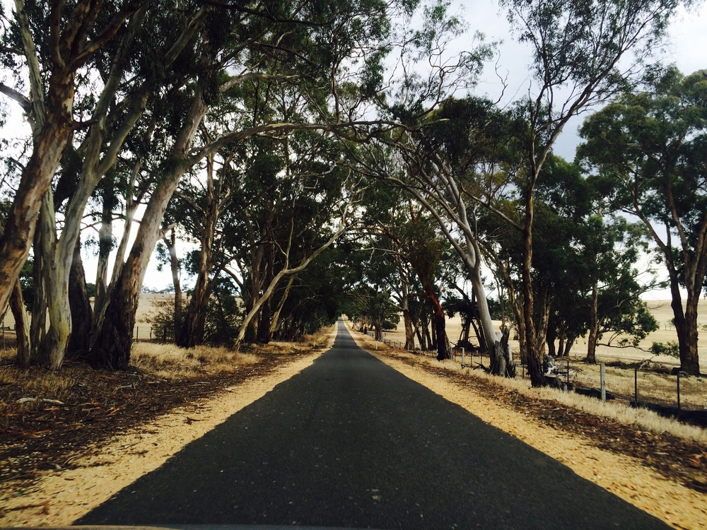 The backroad to Castlemaine
