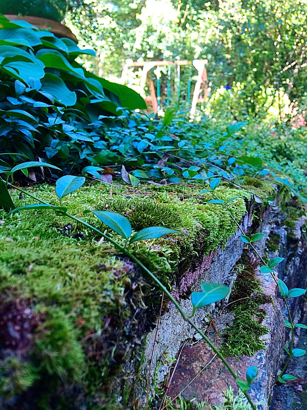 Moss covered anything is pretty. Anything.