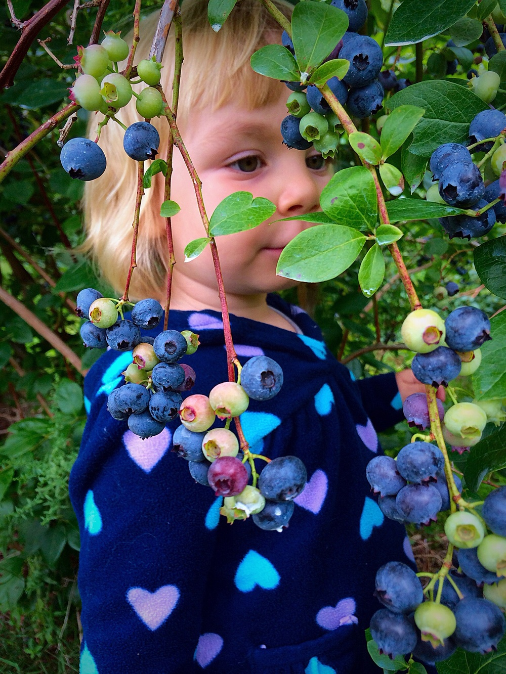 Blueberry camouflage