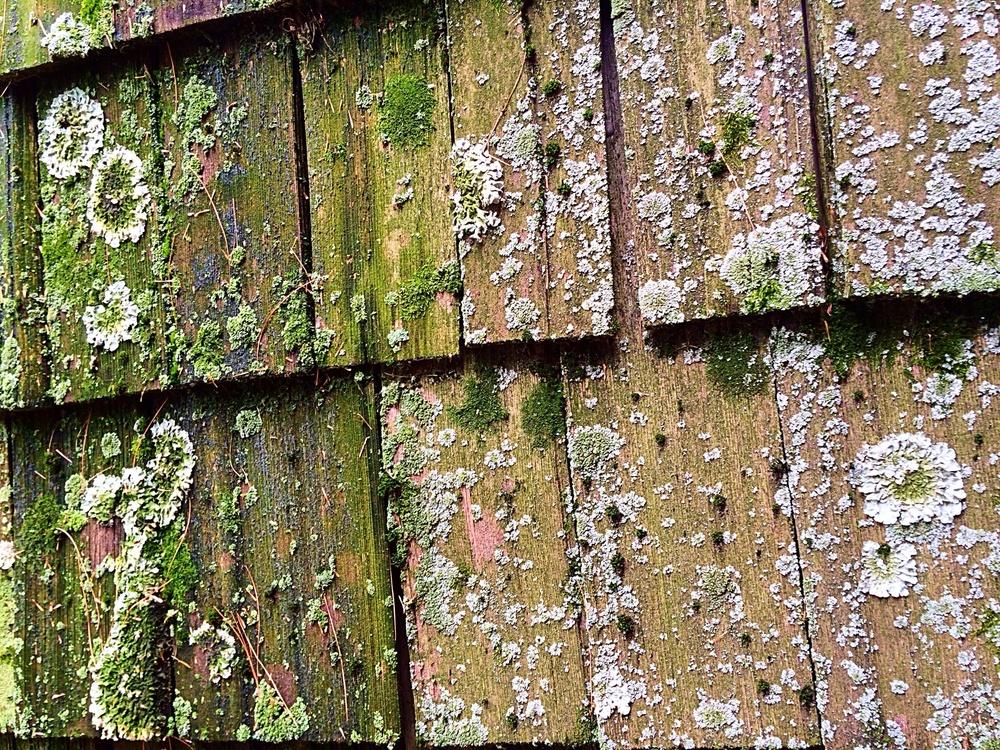 More moss. More beauty.