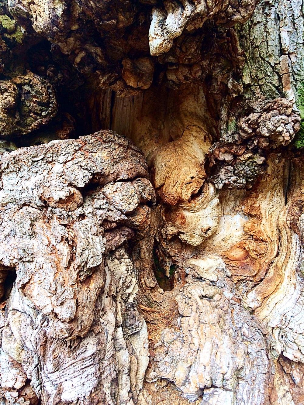 Twisted ash tree