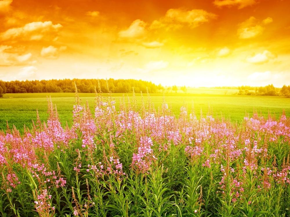 SUMMER WELLNESS INSPIRATION