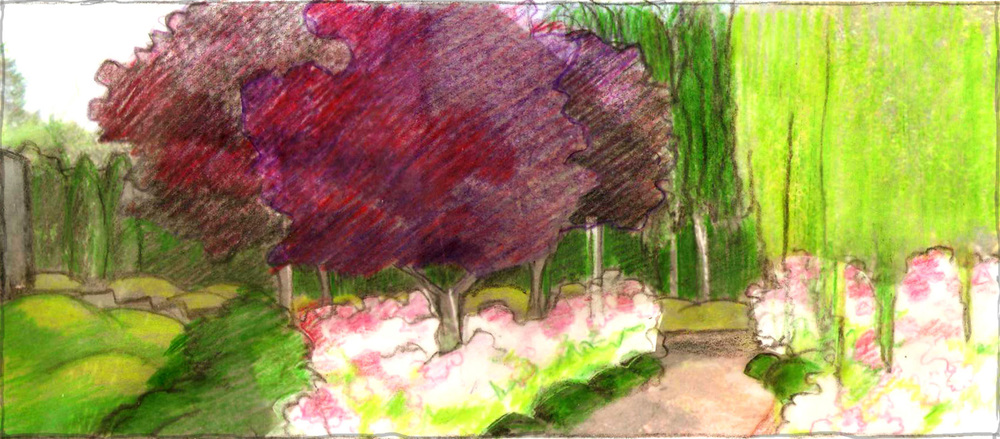 Sketch of entry area with Purple Plum  allée  we designed. White barked Birch stand in a grove we created beyond. In the foreground a Rose and evergreen hedge encircles a gravel patio we placed alongside the Weeping Mayten .