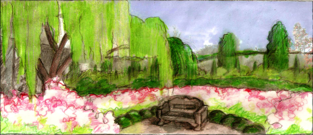 Sketch of Camellia, Rose and miniature evergreen hedges encircling a small gravel patio which we envisioned under the weeping Mayten. In the background are the columns of Pittosporum with Choisya and dwarf Green Tower Boxwood we placed along the wall.
