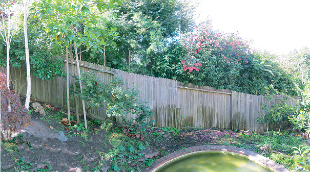 Area of fencing and pond, BEFORE.