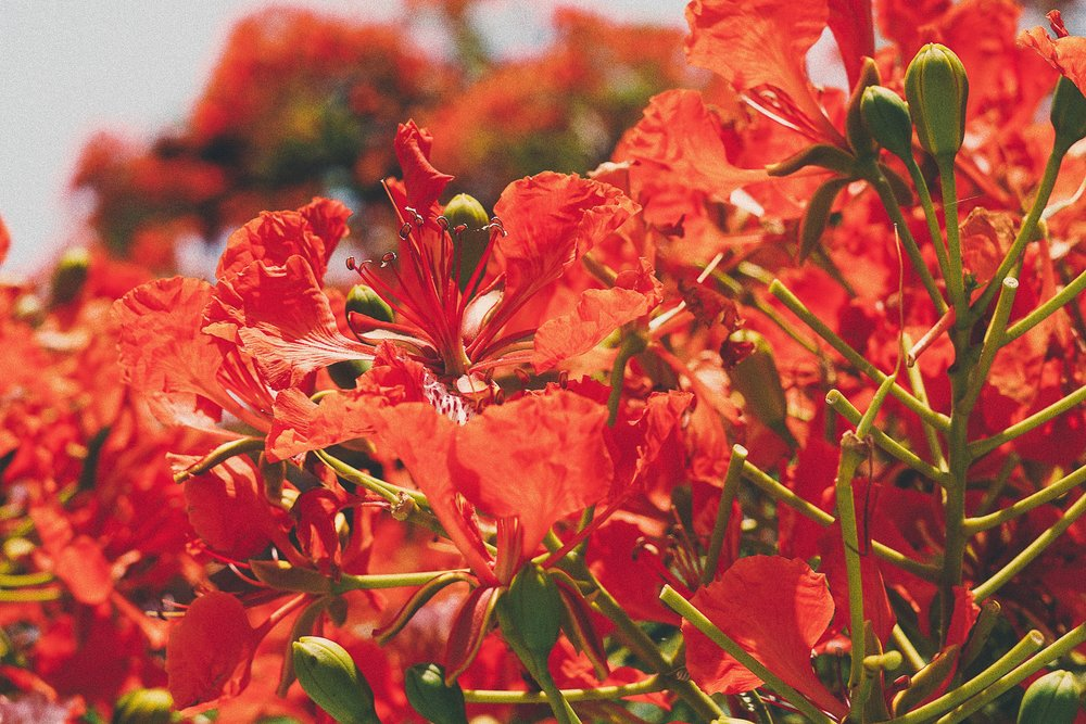 oaxaca-flowers