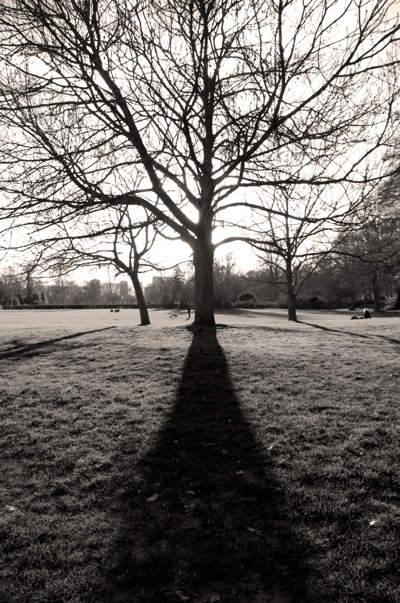 The lengthening shadows tell me summer is nearly here, and I can't wait!!