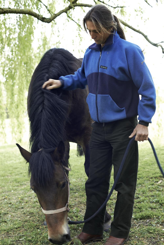 danny horse eatingdanny horse eating.jpg