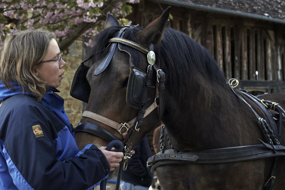 kaye horsekaye horse.jpg