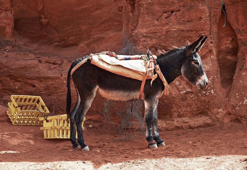 crate-donkey.jpg
