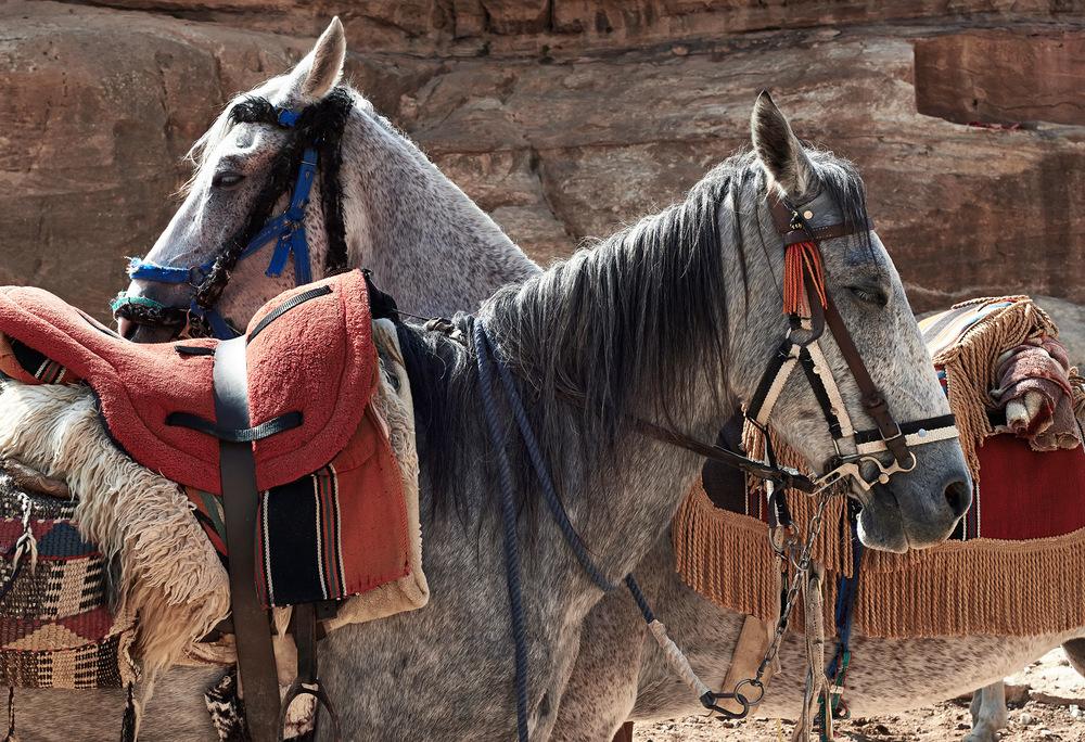 horses-crossing.jpg