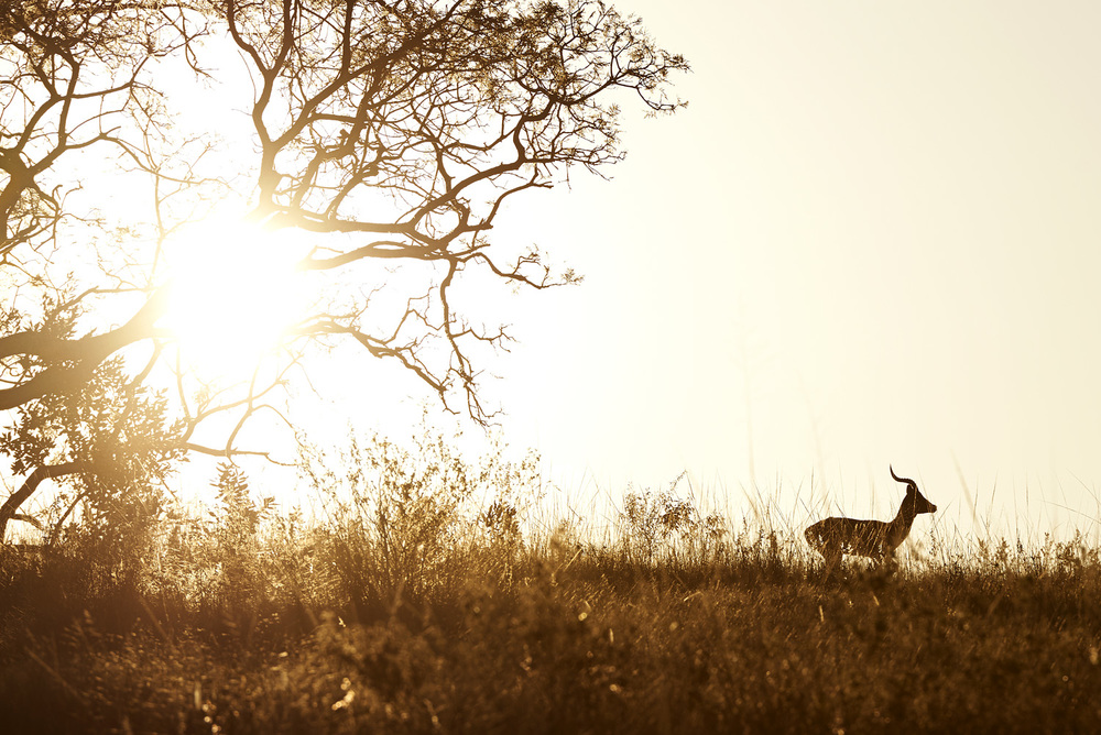impala sunset horizon.jpg