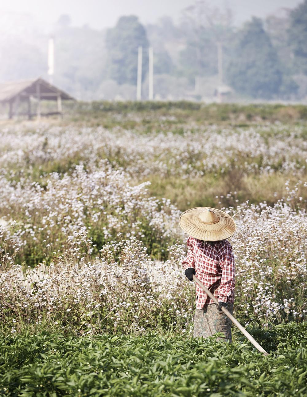 field tilling.jpg