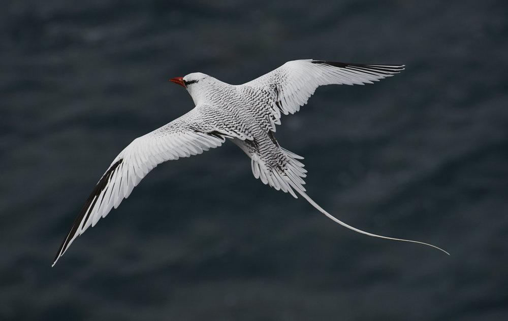 Galapagos_2304.jpg