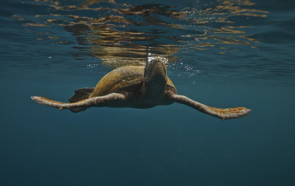 Galapagos_0623.jpg