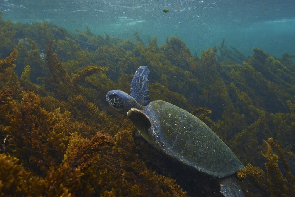 Galapagos_1243.jpg